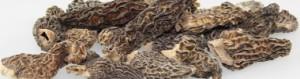 1736 - Spitzmorcheln lose viele_ausschnitt3