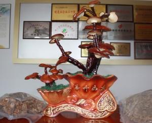 Dekorativer echter Reishi Pilz in einem Laden in China. Daneben Beutel mit getrocknetem Reishi.