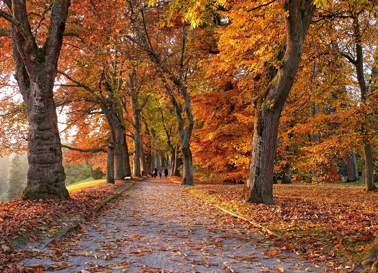 Herbst ist Pilzsaison