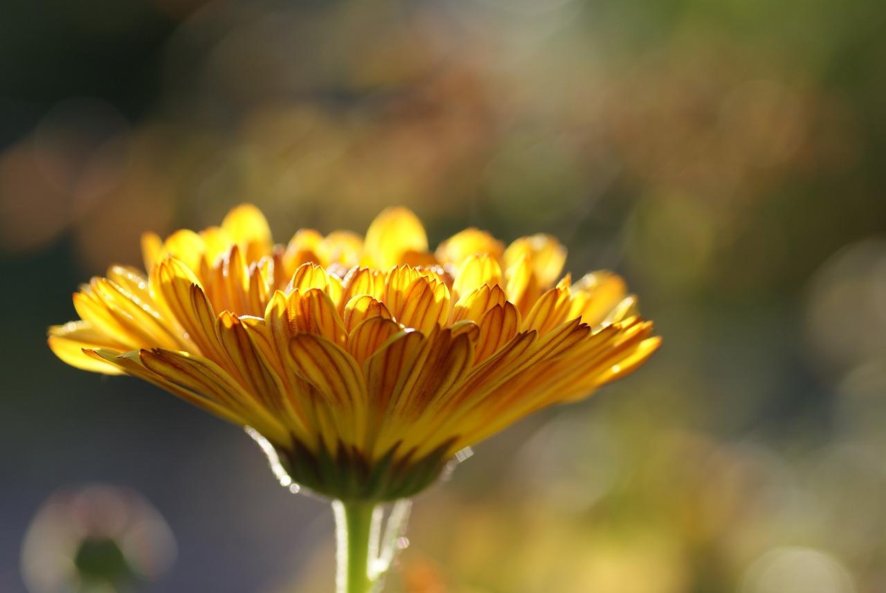 In der Naturheilpraxis von Eleonore Bölts sind Vitalpilze ein großes Thema