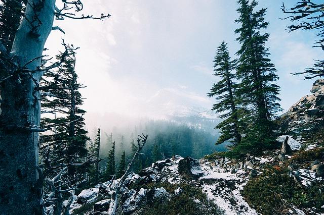 Winter mit Zunderschwamm, Hericium,