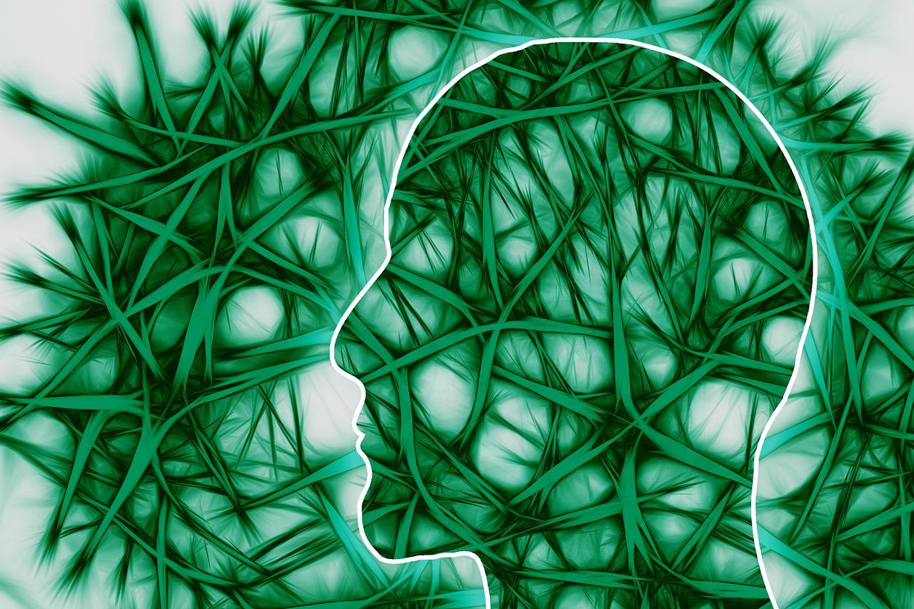 Phenylalanin – essentielle Aminosäure für Hormonstoffwechsel und Gehirnfunktion