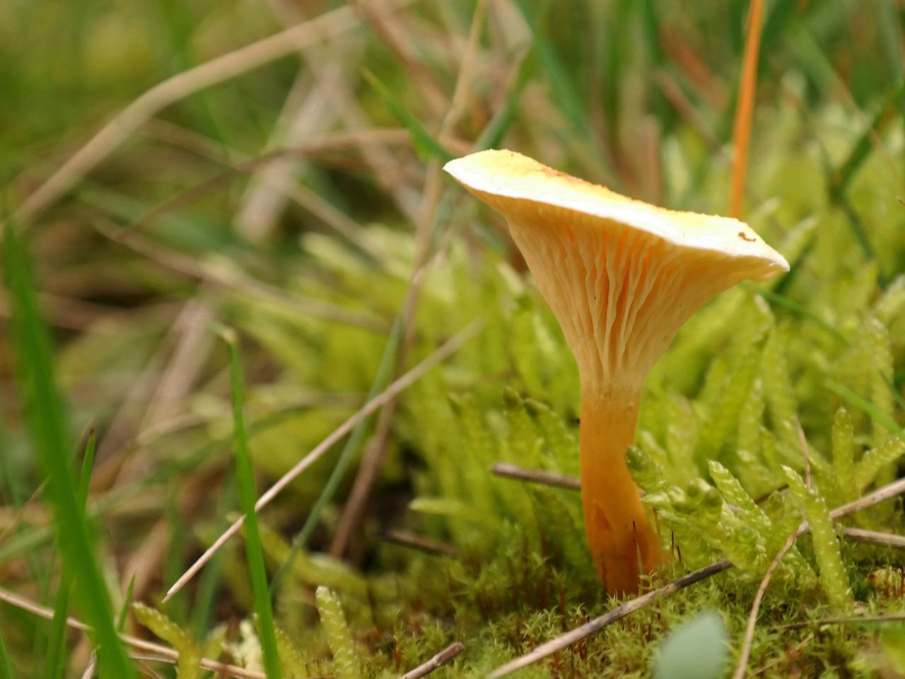 Pilze sind ein guter Lieferant für essentielle Aminosäuren.