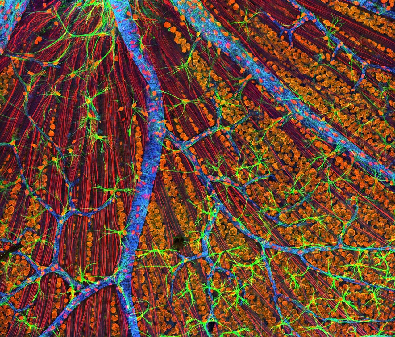 Pilze und ihre Mineralstoffe – Magnesium
