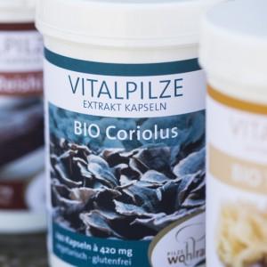 Coriolus_Vitalpilz
