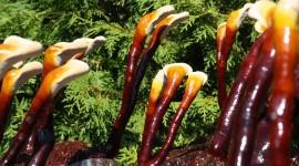 Der Reishi – göttlicher Pilz der Unsterblichkeit