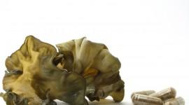 Auricularia polytricha – Ein Portrait