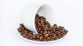 Wohlrab's BIO-Reishi im Kaffee