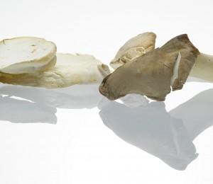 Was Sie schon immer über Pilze wissen wollten
