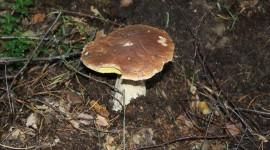 Pilze sammeln das ganze Jahr möglich