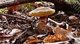 Der Aufbau von Pilzen