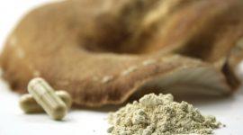 Shiitake – das Aminosäurenwunder unter den Vitalpilzen