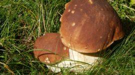 Pilze und ihr wertvolles Eiweiß