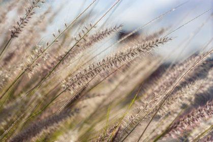 Wie Vitalpilze bei Allergien eingesetzt werden können