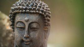 Wenn Naturkräfte das Wohlbefinden verbessern – Vitalpilze
