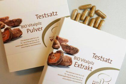 Workshops über Vitalpilze