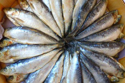Pantothensäure – ein weiteres B-Vitamin in Speise- und Vitalpilzen