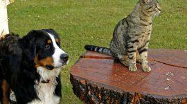 Vitalpilze hilfreich für Tiere