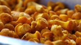 Eisen – ein lebenswichtiger Mineralstoff in Speise- und Vitalpilzen
