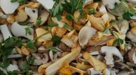 Pilze und ihre Spurenelemente – Kupfer