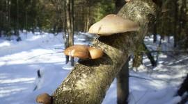 Im Winter Pilze sammeln