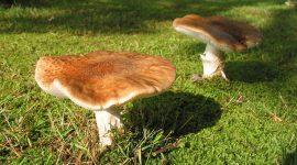 Was macht Pilze so gesund?