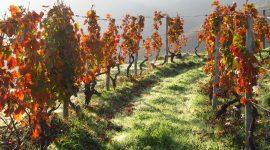 Das Weingut Kühling aus Rheinhessen